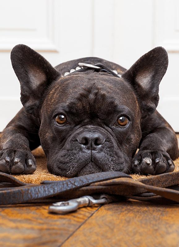 Dog Importing